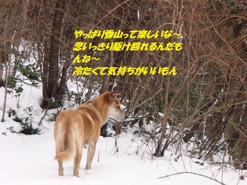 P1140068_convert_20160115100624.jpg