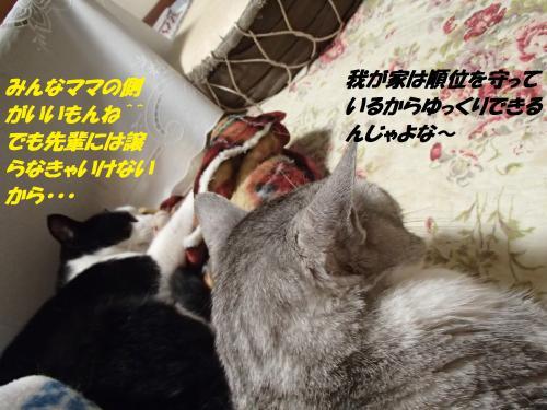P1150083_convert_20160119073312.jpg