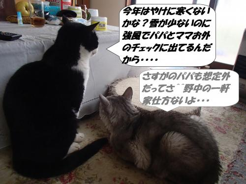 P1240151_convert_20160125074818.jpg