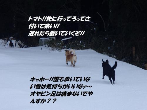 P1250165_convert_20160126105035.jpg