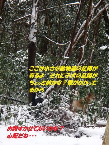 P1250176_convert_20160126105000.jpg
