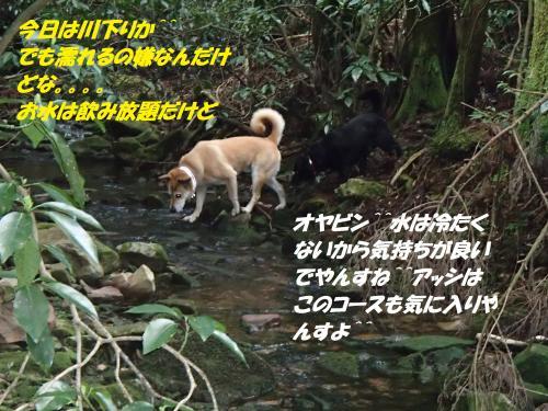 P2050262_convert_20160207135133.jpg