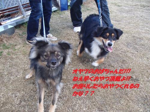 P2070289_convert_20160209074257.jpg