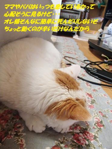 P2150359_convert_20160216082455.jpg