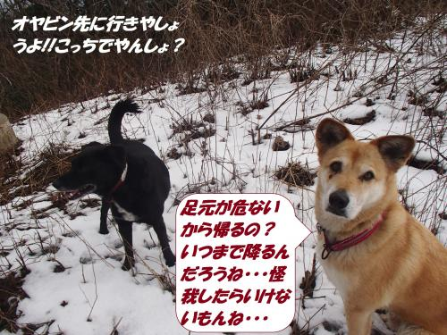 P2160384_convert_20160218080037.jpg