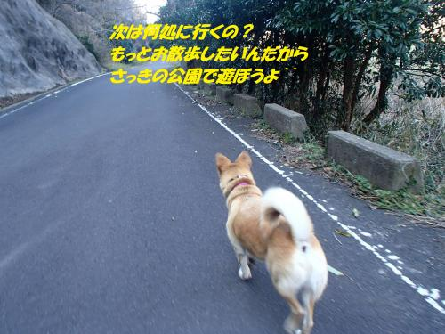P3020528_convert_20160304072337.jpg