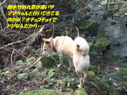 P3070580_convert_20160308081028.jpg