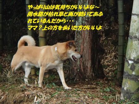 PC140240_convert_20151215143939.jpg