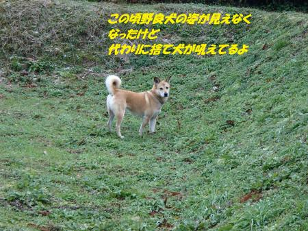 PC170261_convert_20151218101726.jpg