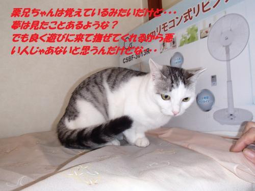PC190284_convert_20151223074220.jpg