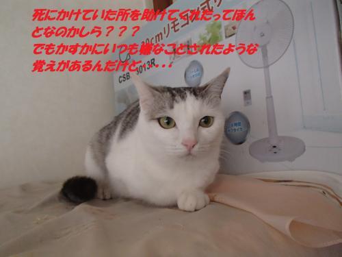 PC190285_convert_20151223074236.jpg