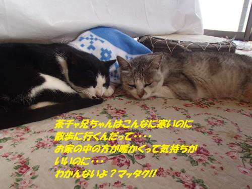 PC250342_convert_20151227075755.jpg