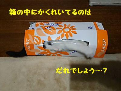DSC_3664.jpg