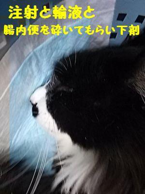 DSC_3683.jpg
