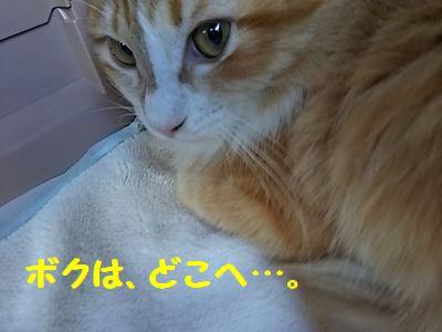 DSC_5086.jpg