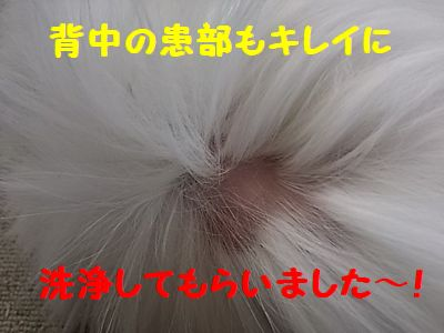 DSC_5485.jpg
