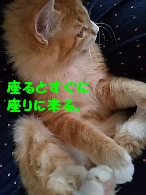 DSC_5501.jpg