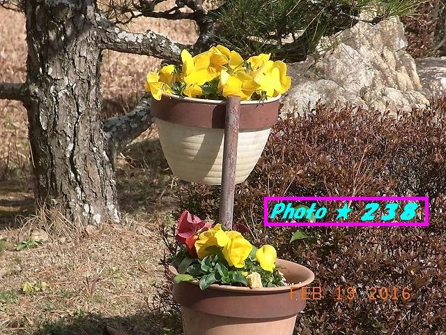 玄関の花①