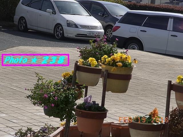 玄関の花②