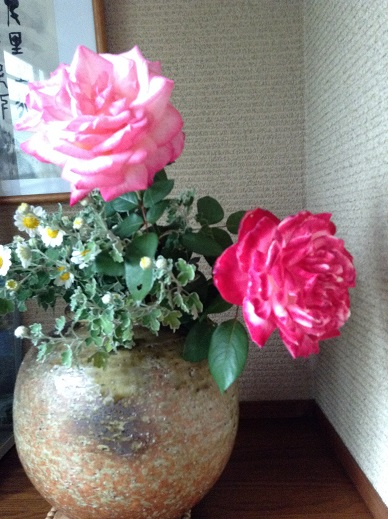 満開になった薔薇