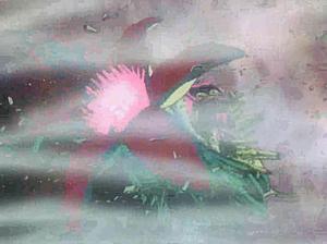 花咲く宇宙海獣