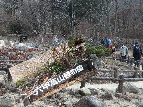 2016・03・05六甲高山植物園1