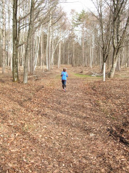 森の小径1129_白樺トレイル