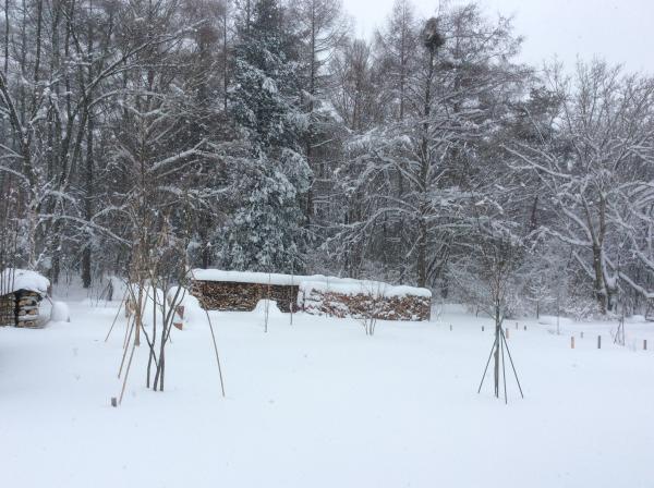 雪0118_森の様子