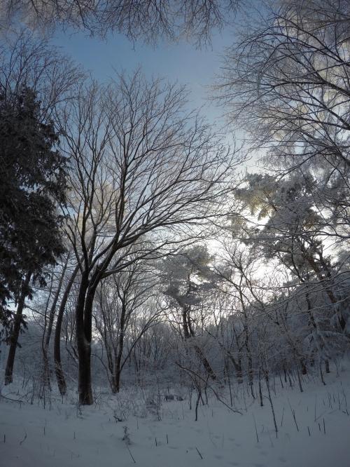 霧氷0131_その1