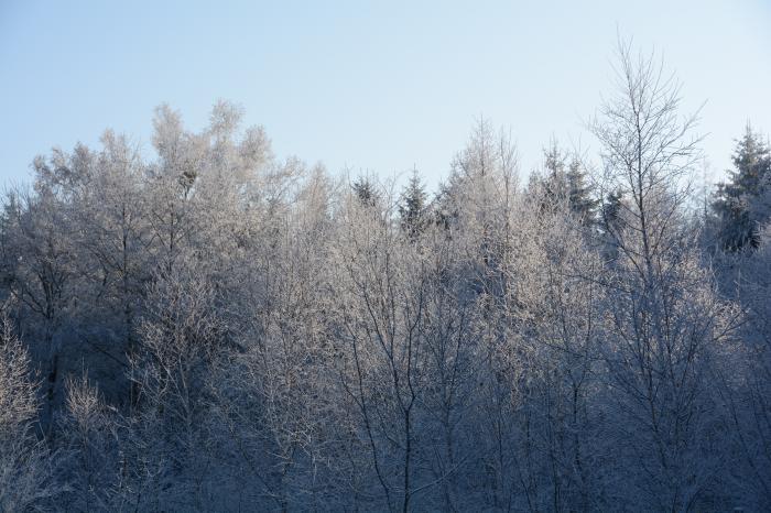 霧氷0131_その4