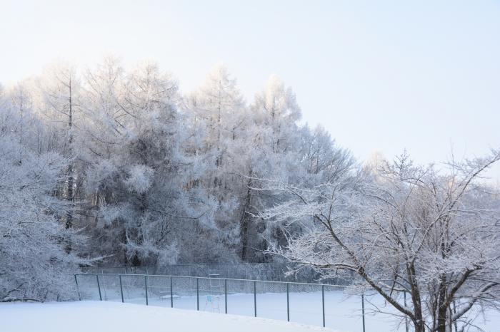 霧氷0131_その5