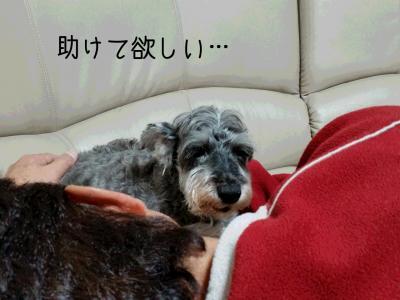 moblog_31e8a748.jpg