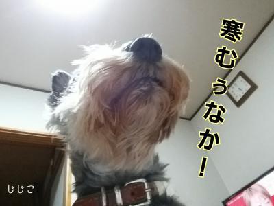 moblog_8098aea0.jpg