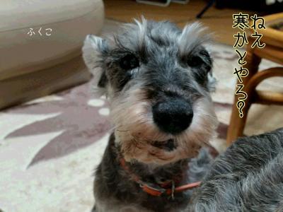 moblog_a159f8a8.jpg