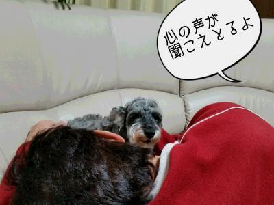 moblog_ab96194a.jpg