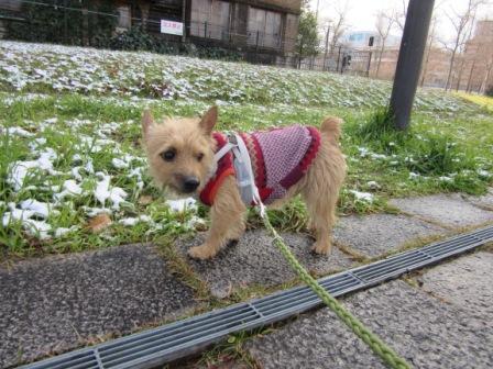 IMG_444616・1・19初雪