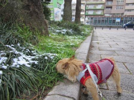 IMG_445116・1・19初雪