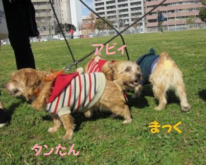IMG_4599 茶犬