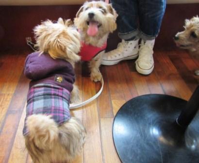 IMG_4640 茶犬