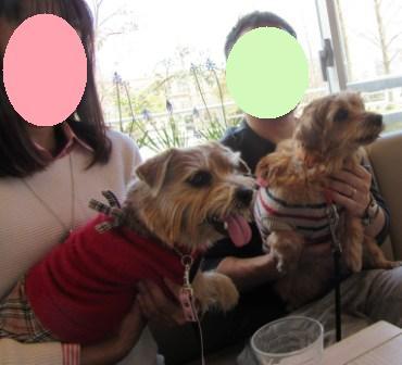 IMG_4658 茶犬