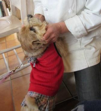 IMG_4659 茶犬