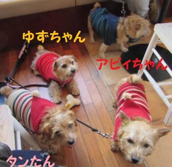 IMG_4669茶犬