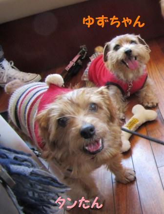 IMG_4670 茶犬