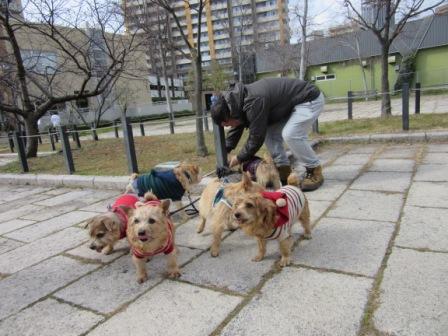 IMG_4674茶犬
