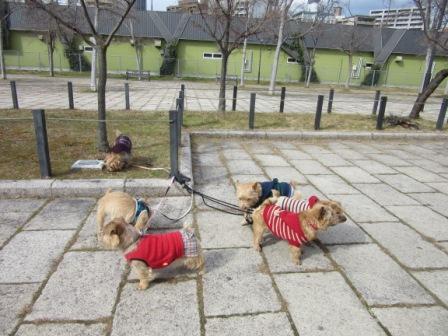 IMG_4678茶犬