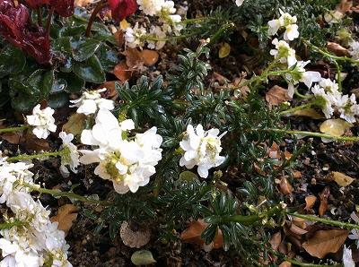 凍ってる花