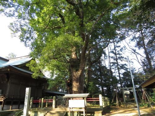 神崎神社ー50