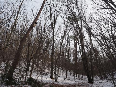 ムササビの森151127