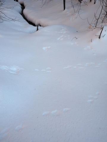 森入口の足跡160202