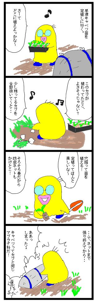 0225キャベツ苗